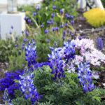 名古屋ふらんすの庭のイメージ