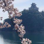 犬山枕木の庭。の報告のつもりがのイメージ