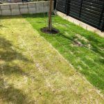 岡崎枕木菜園芝生の庭。姫高麗芝、同じ種類なのに。のイメージ