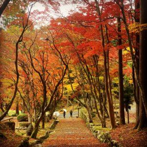 癒しの空間。鶏足寺。自然石ともみじのアプローチ。のイメージ
